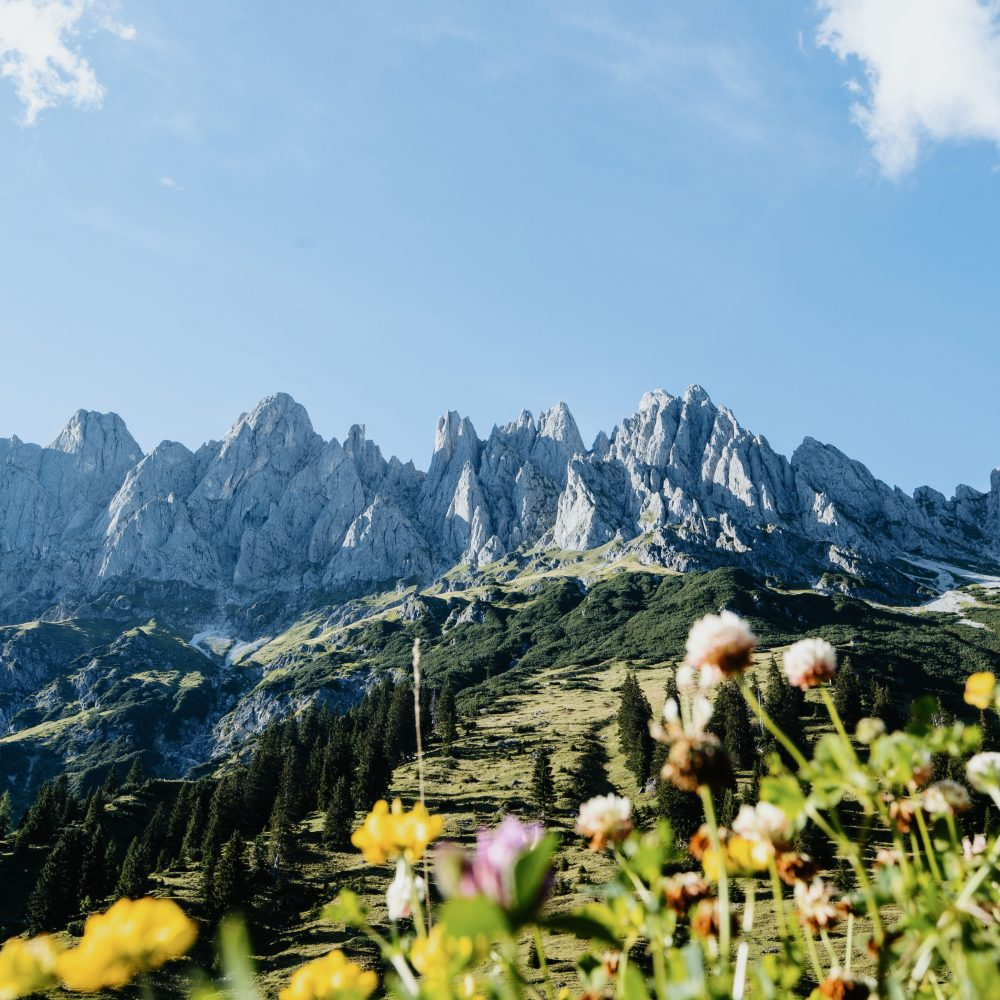 SalzburgerLand Wald Titelbild
